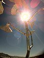 Burning Man 2011 Victor Grigas Sculpture with lens flare IMG 4615.jpg