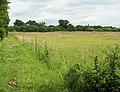 Buttercups in meadow - geograph.org.uk - 1366061.jpg