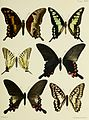 Butterflies from China, Japan, and Corea (1892) (20484559746).jpg