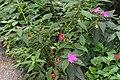 Butterfly Rainforest FMNH 35.jpg