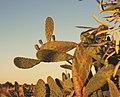 Cactus (35784976056).jpg