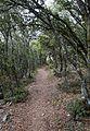 Camí i bosc cap a la cova Remígia, Ares del Mestrat.JPG