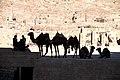 Camels in Petra 2, Jordan.jpg