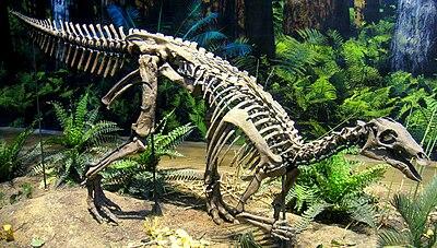 Camptosaurus aphanoecetes - IMG 0673.jpg