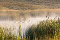 Canada Geese (14965480153).jpg