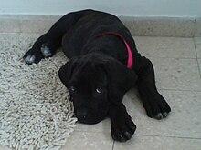 Black Dog Kennel Socorro