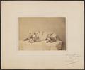Canis lupus familiaris - 1873 - Print - Iconographia Zoologica - Special Collections University of Amsterdam - UBA01 IZ22300055.tif