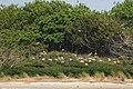 Cape Fear River - Battery Island - panoramio (5).jpg