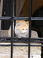Cat guarding the entrance to the old Roman Road (4160309194).jpg