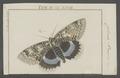 Catocala - Print - Iconographia Zoologica - Special Collections University of Amsterdam - UBAINV0274 057 18 0007.tif