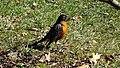 Central Park - Bird (New York) (31366517338).jpg