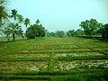 Central Rice Research Institute cuttack.jpg