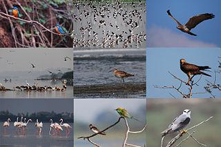 Birding in Chennai