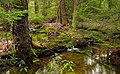 Cherry Run (Headwaters) (1) (8693865711).jpg