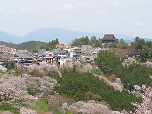 Cherry blossoms of Yoshinoyama (Mt.Yoshino is ...