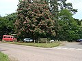 Chestnut tree at the junction, Feniton - geograph.org.uk - 1320248.jpg