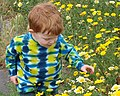 Child among wildflowers (6785302942).jpg