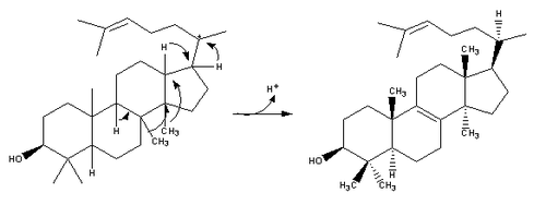 Cholesterol-Synthesis-Reaction13.png