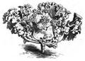 Chou à grosses côtes frangé Vilmorin-Andrieux 1883.png