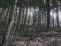 Cima del Camurcina - panoramio.jpg
