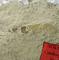 Cimbrophlebia brooksi Holotype SR 06-20-05 B.jpg