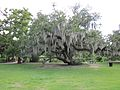 City Park NOLA 4 July 2010 oak with Spanish moss.JPG