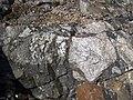 Clast-rich impact pseudotachylite (Sudbury Breccia, Paleoproterozoic, 1.85 Ga; Windy Lake Northwest roadcut, Sudbury Impact Structure, Ontario, Canada) 88 (47758603011).jpg