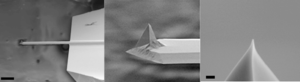 Piezoresponse force microscopy -  Scanning electron microscopy images of a PtIr5 coated scanning probe. From left to right shows images of increasing magnification where the scale bar in the first image is 50 μm and in the third is 200 nm. The first image shows the substrate, cantilever and the tip whereas the second image shows the tip geometry whilst the last image shows the tip apex and demonstrates the fine point that is achieved e.g. radius of curvature of less than 40 nm.