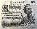 Conrad Ges(s)ner Wolverine Vielfraß Mark Benecke printed in Heidelberg year 1606.jpg