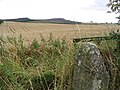 Cornfield north-northeast of Lorbottle - geograph.org.uk - 542526.jpg