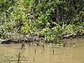 Costa Rica (6091630719).jpg