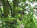 Coulée verte de Colombes, nichoir (2018) 1.jpg