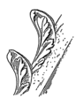 Crockets (PSF).png