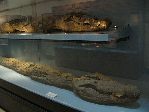 Crocodiles mummies, Cairo Egyptian Museum 02