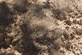 Cryptobiotic soil crust in Natural Bridges National Monument near Sipapu 20100906 - number 1.png