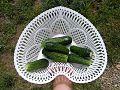 Cucumber-Fruit 93121-480x360 (4810844103).jpg