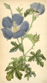 Curtis's Botanical Magazine, Plate 4329 (Volume 73, 1847).png