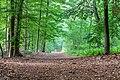 Dülmen, Börnste, Waldweg -- 2020 -- 7849.jpg