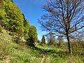 D-BW-BL-Albstadt - Naturschutzgebiet Mehlbaum 1576.JPG