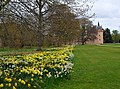 Daffodils at Brodie Castle - geograph.org.uk - 1278411.jpg