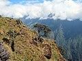 Daldun range - panoramio.jpg