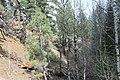 Davis Creek Park - panoramio (37).jpg