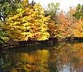 Des Plaines River (4029303272).jpg