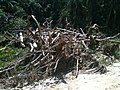 Destruição^ 2013, aonde o rio transbordou... - panoramio.jpg
