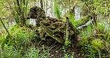 Diakonievene. Natuurgebied van It Fryske Gea. 31-05-2019. (d.j.b). 05.jpg