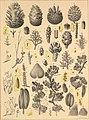 Die im Bernstein befindlichen organischen Reste der Vorwelt, gesammelt (1845) (20618776189).jpg