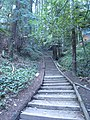 Dipsea Trail, after climbing the lowest stairway as far as you can see, you'll round a bend and discover you're only halfway up the first stairway. - panoramio.jpg