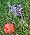 Dog with basketball.JPG