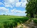 Droga przy brzegu jeziora Sępoleńskiego. - panoramio (1).jpg