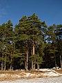 Druvciema piekraste - panoramio (3).jpg